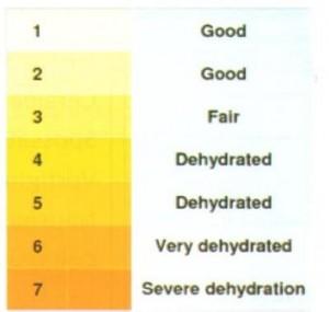 Acqua corporea e urine