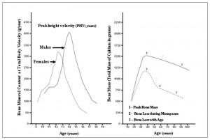 picco di massa ossea in base alla velocità nello sviluppo e nella vita intera